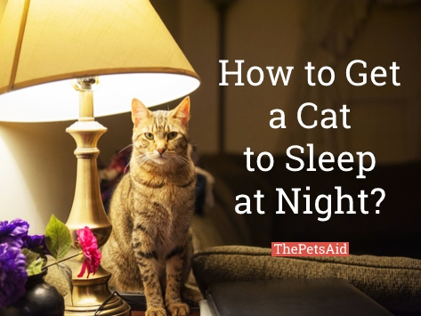 How to Get a Cat to Sleep at Night