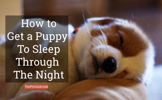 How to Get a Puppy to Sleep Through the Night
