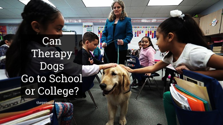 Can Therapy Dogs Go to School