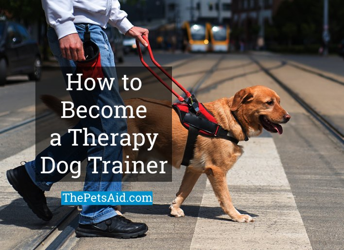 How to Become a Therapy Dog Trainer